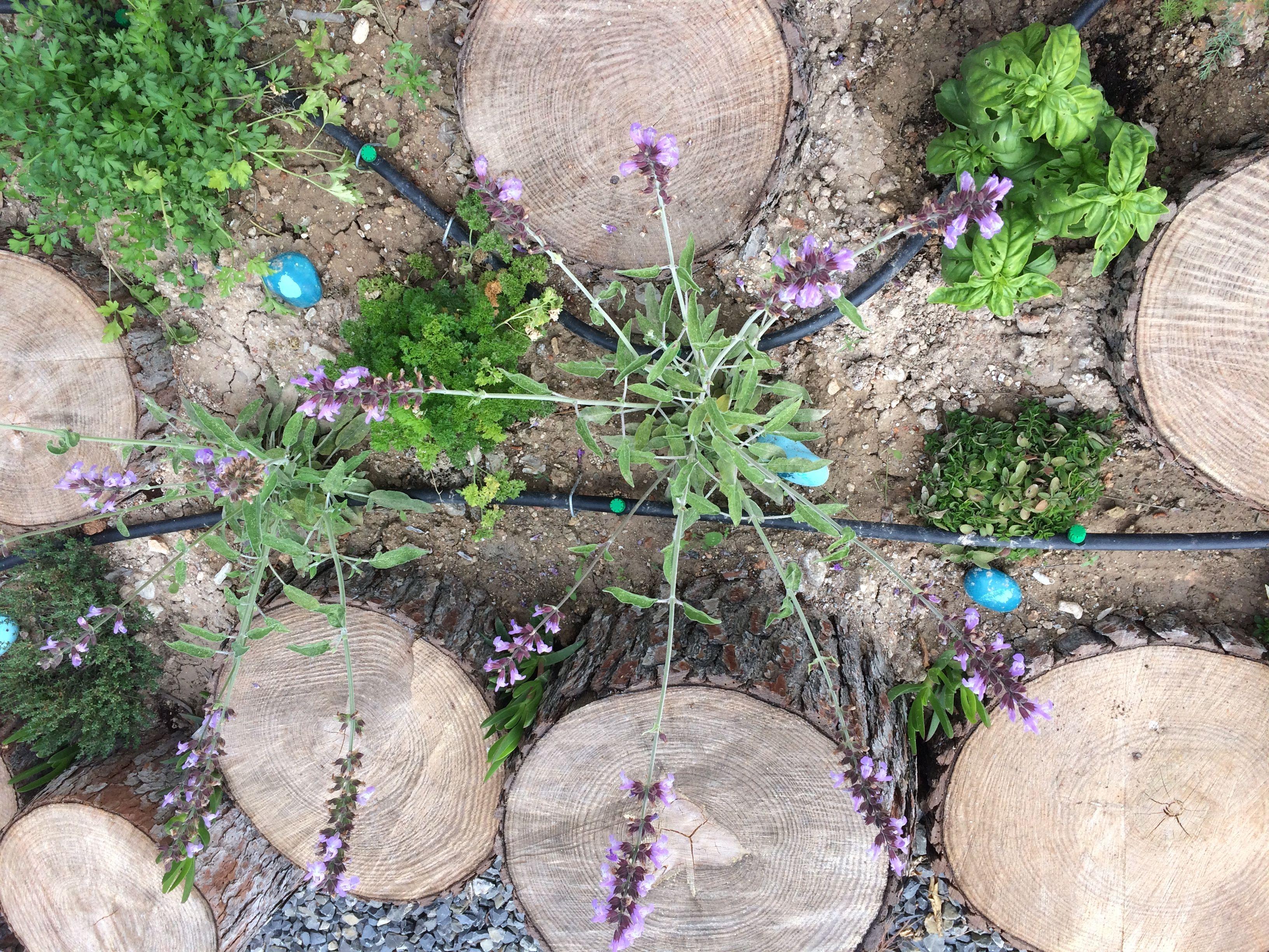 Diy Trend Kruidentuin : Kruidentuin tussen stammetjes van een oude boom spaans huis