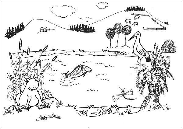 Situacni Obrazky U Rybnika More Rybnik Pond Life Education A