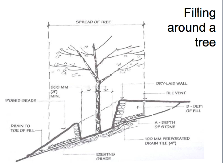 Key points look at the species of tree water to root zone is explore tree diagram trees and more ccuart Image collections