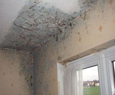 تسرب المياه في الجدران والتى تحدث عها متخصص من علماء الإنشاءات