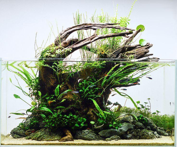 ronbeckdesigns: aquascape | unknown photo credit (via ...