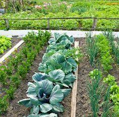 Huerto ecol gico rotaci n de cultivos jard n y huertos for Rotacion cultivos agricultura ecologica