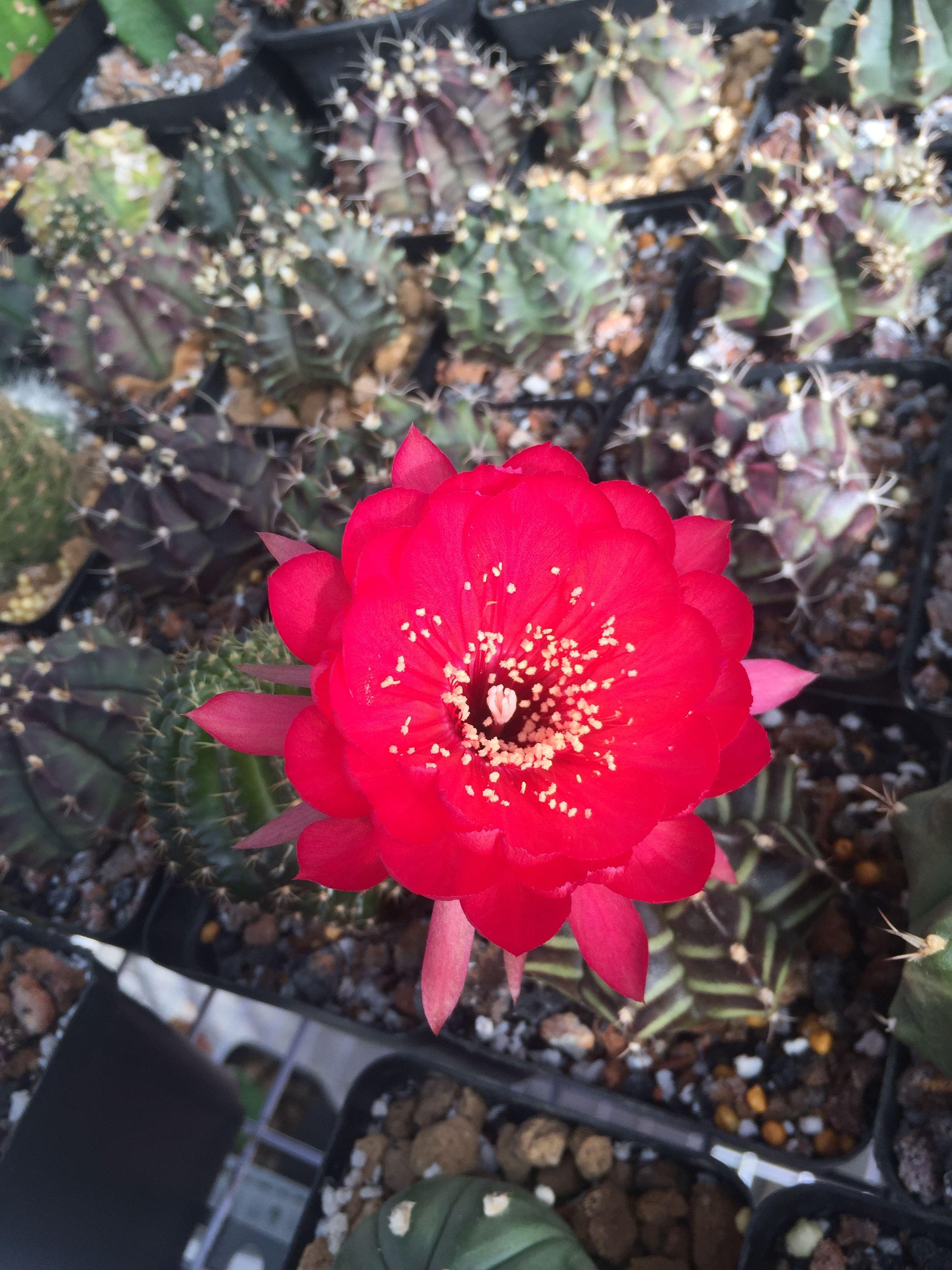 Happy New Year 2018 Cacti Cactii Cactus Succulove Succulents