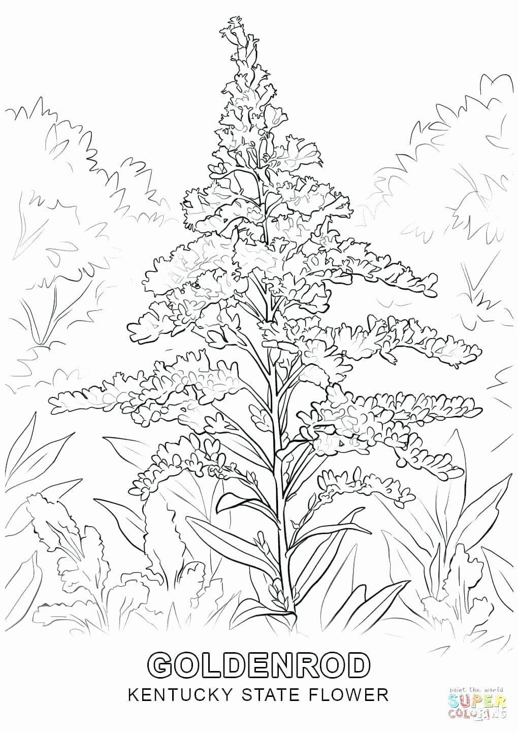 Flower Wreath Coloring Page Beautiful Montana State Flower