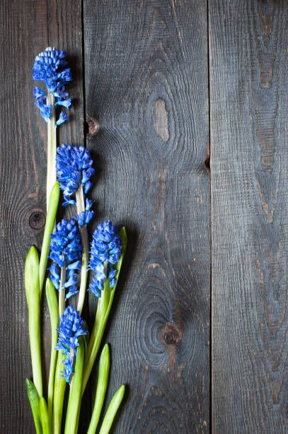 wooden background with blue hyacinth