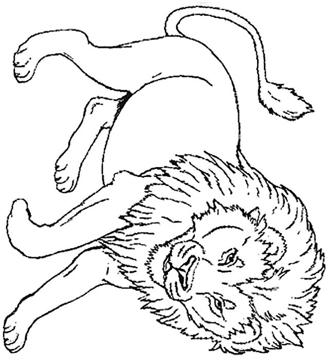 lion coloring pages  Singa Colouring Pages Hawaii Dermatology
