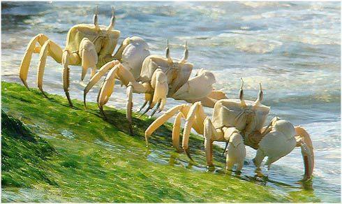 socotra island  endemische fauna en flora | Socotra: Un archipiélago de extrañas especies en peligro de ...