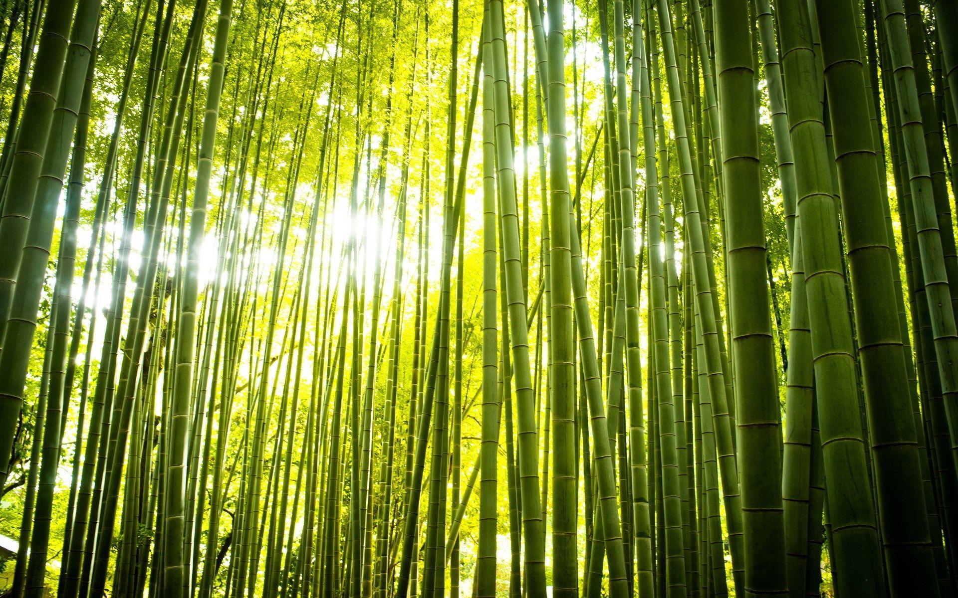 Free Desktop Bamboo Backgrounds