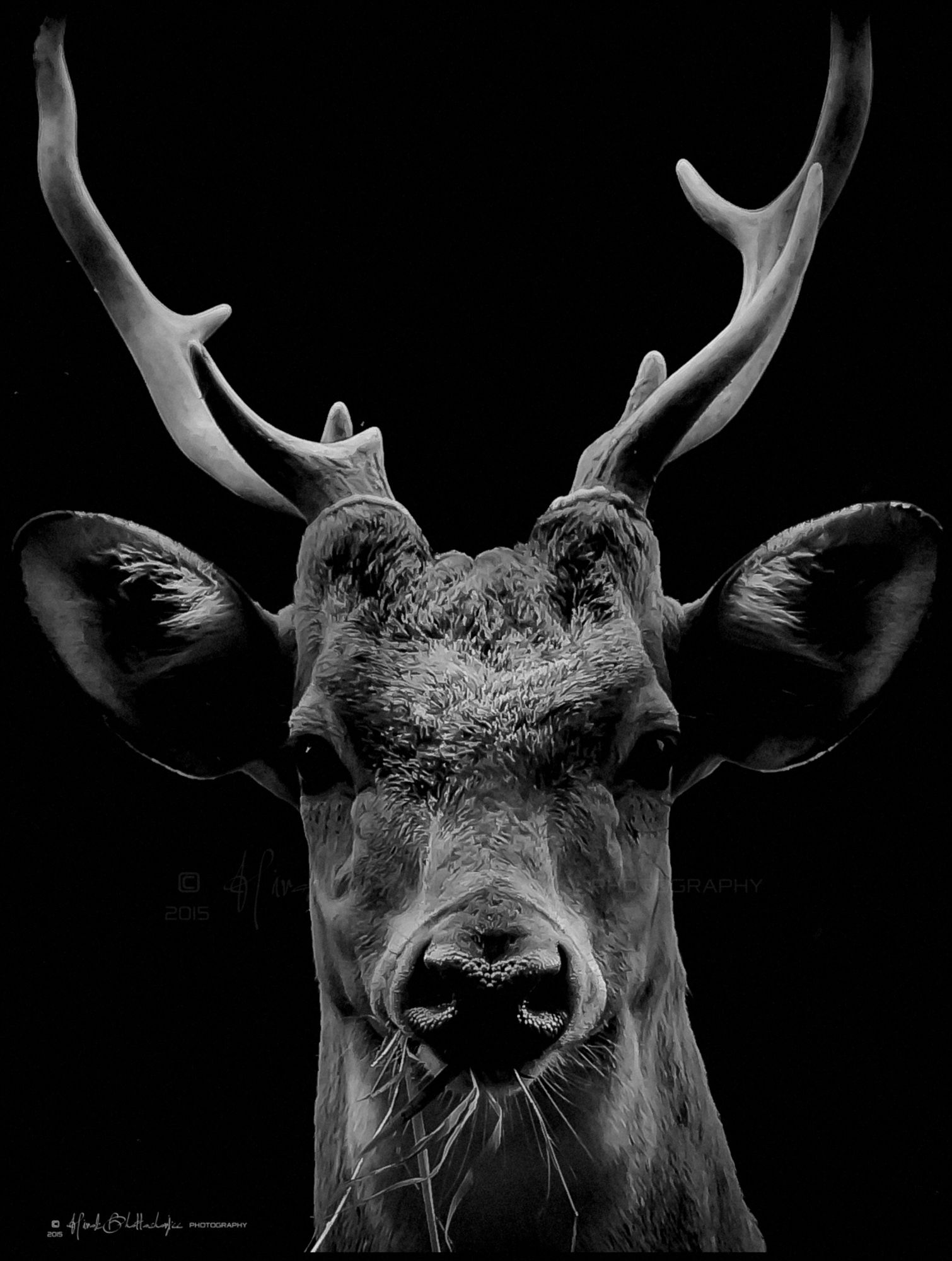 Deer black and white photography google search r deer
