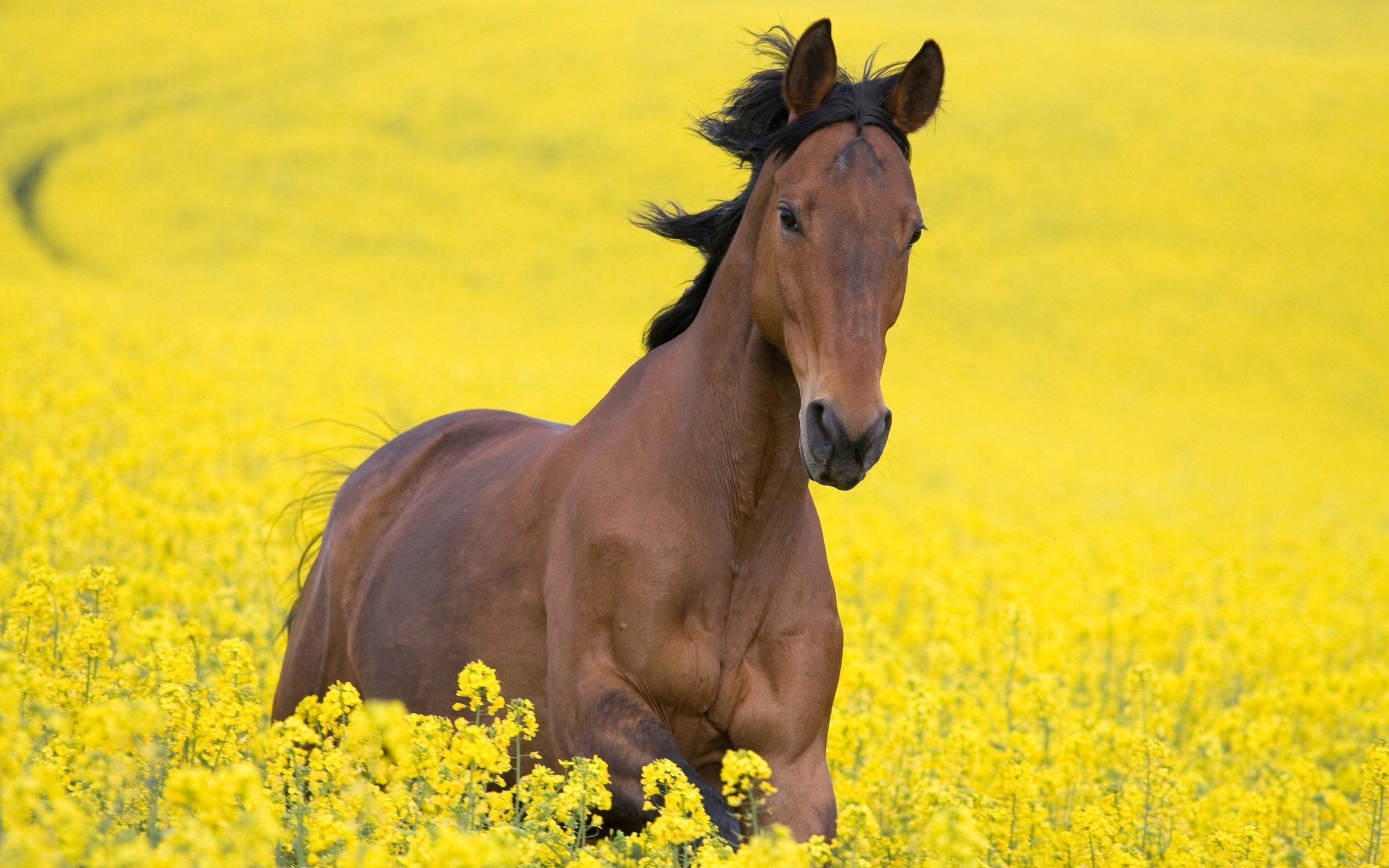 Great Wallpaper Horse Beauty - 8453e5d82fa99f7888bf1016c37151a1  Collection_904640.jpg