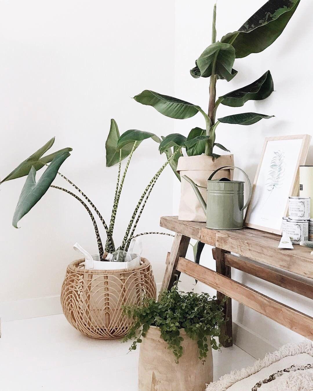 banc en bois pots en rotin ou en papier ce coin. Black Bedroom Furniture Sets. Home Design Ideas
