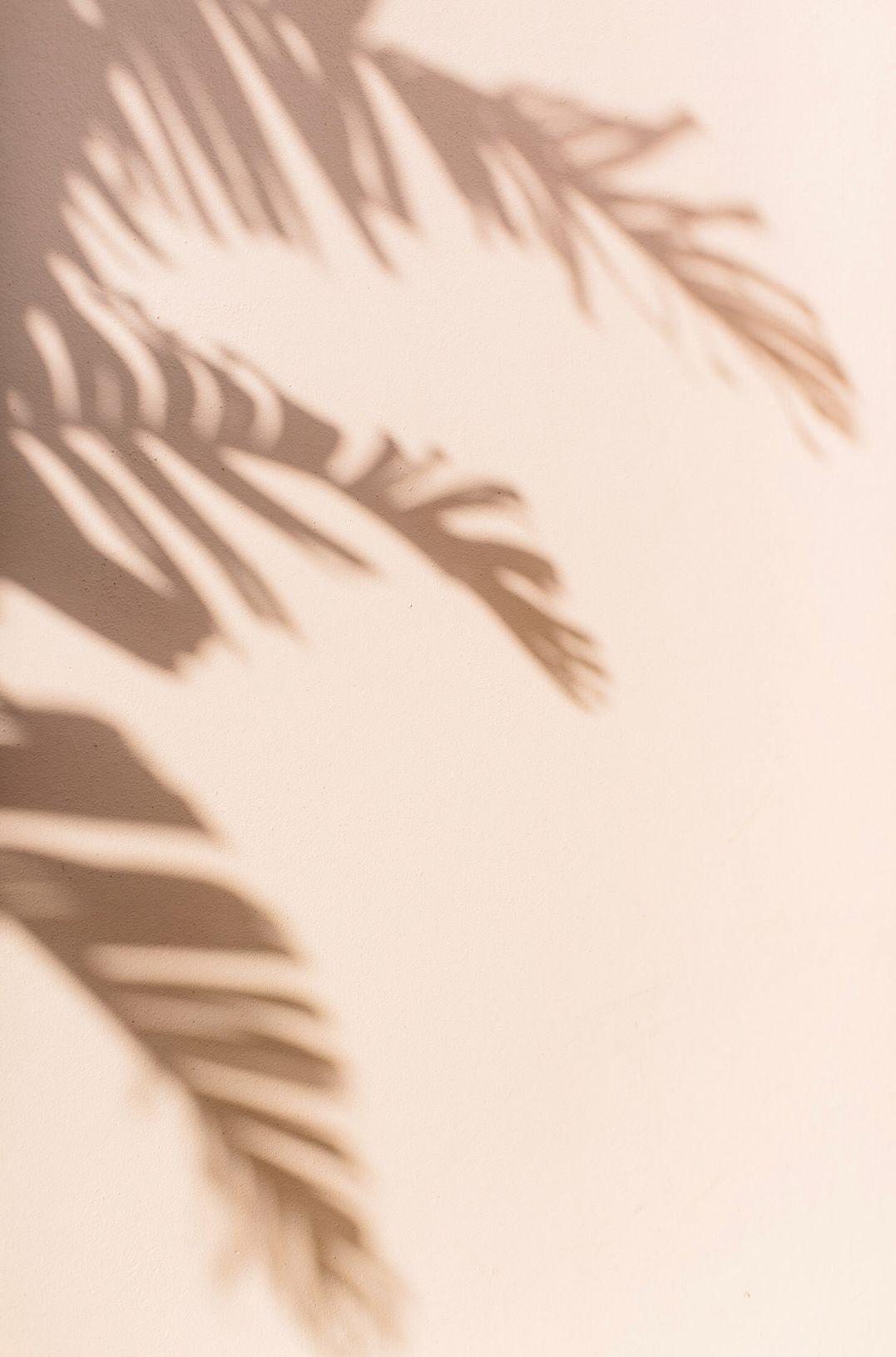 Pin By Rachel Kuch On Florida Beige Aesthetic Aesthetic Iphone Wallpaper Beige Wallpaper