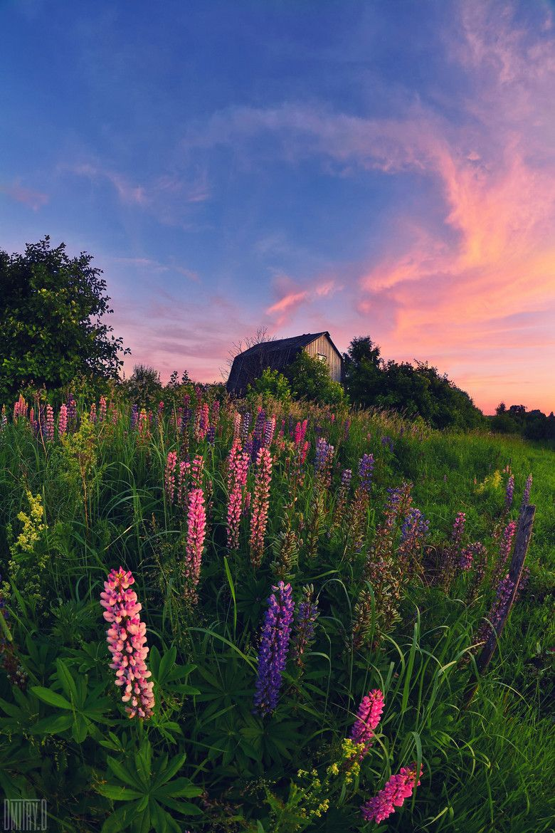 Summer Time Color Nature Aesthetic Nature Photography Beautiful Nature