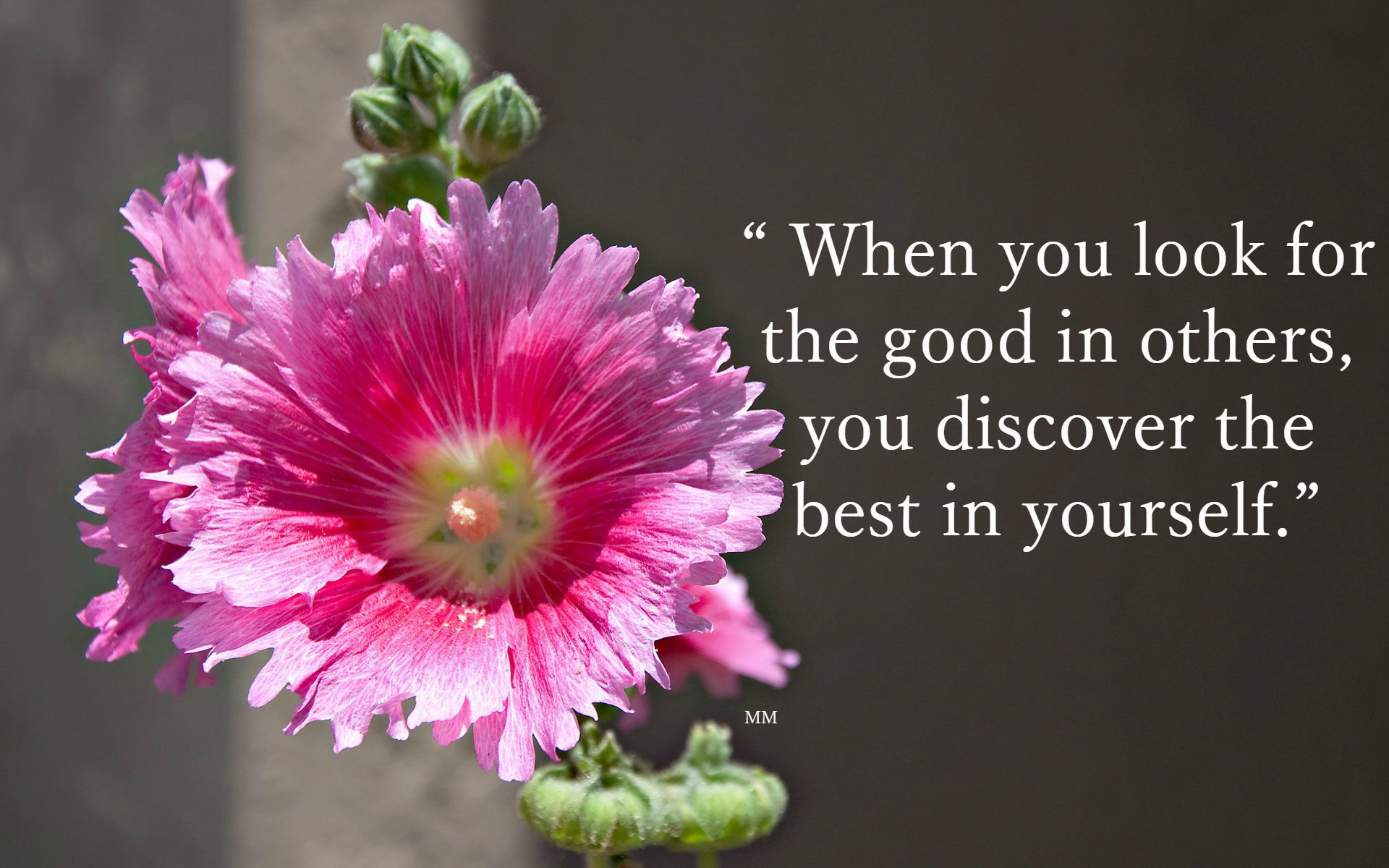 The Best Nature Quotes The Best Quotes Pink Flower Thoughts Nature