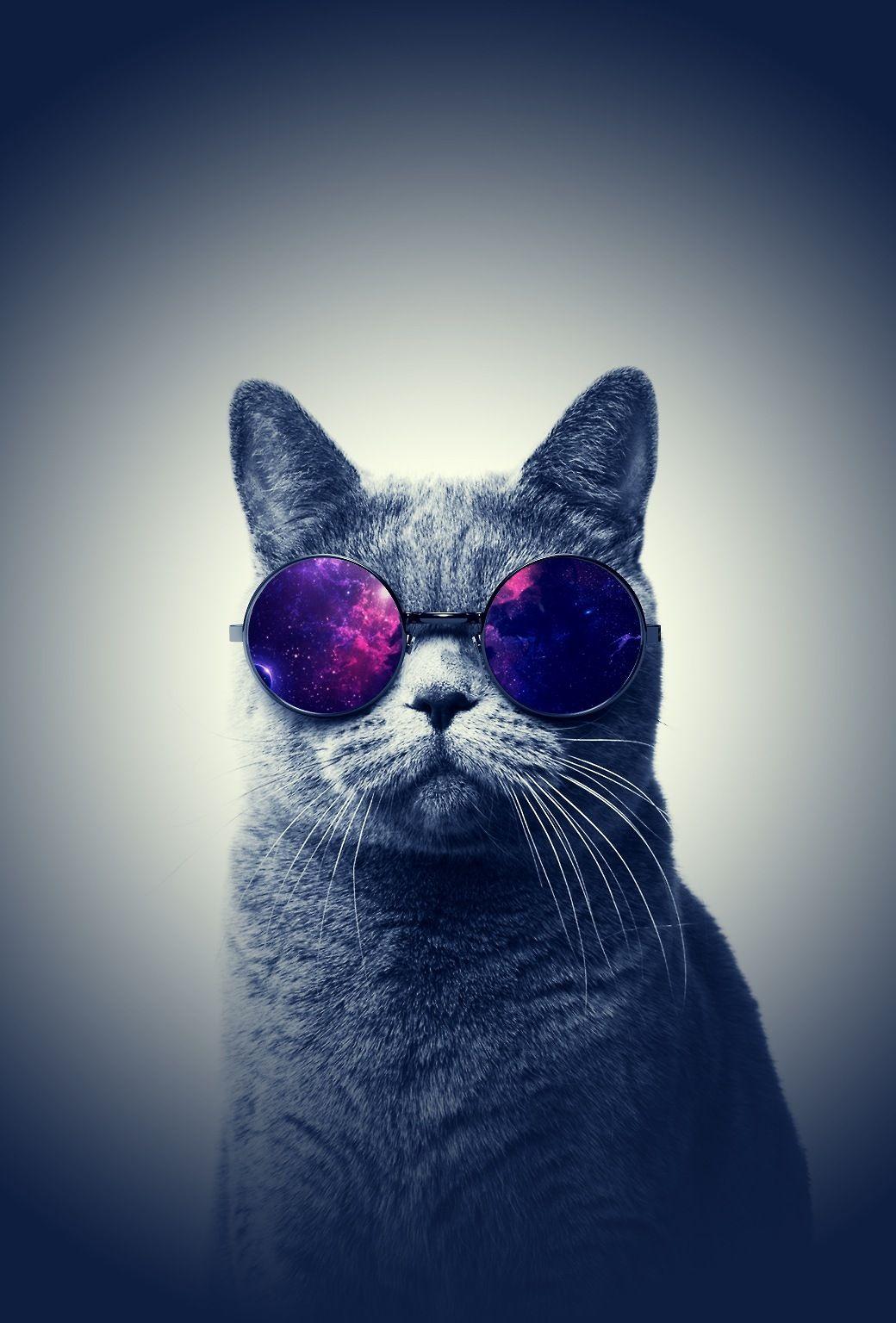 Imgur Cat Wallpaper Hipster Cat Hipster Phone Wallpaper
