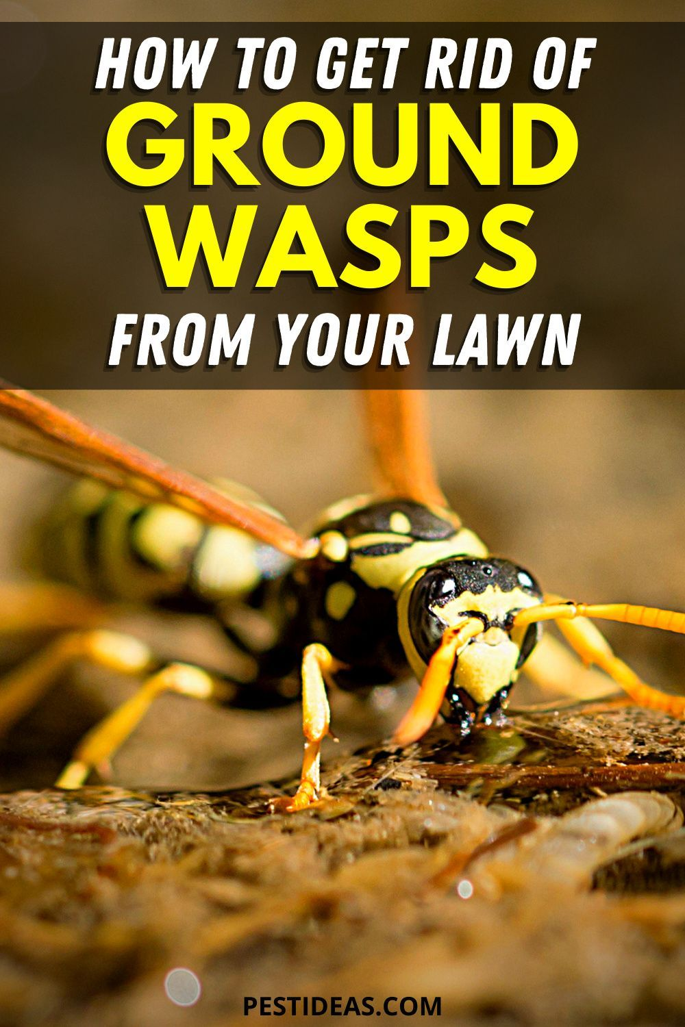 Get rid of ground wasps from your lawn get rid of wasps