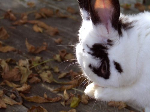 Bunny Mourns the Loss of Summer - October 14, 2011