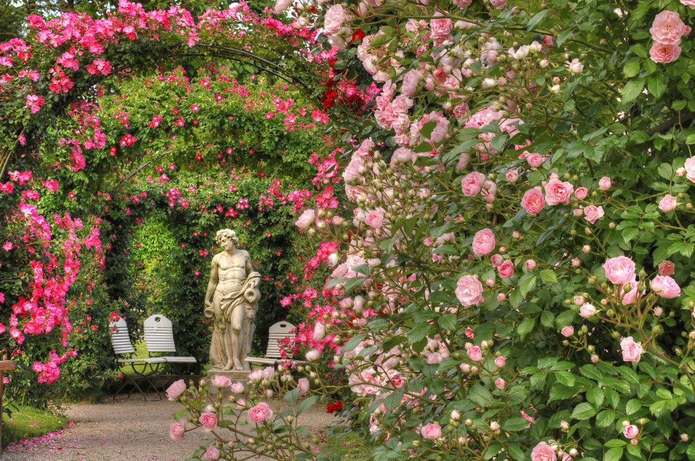 verzauberter rosengarten enchanting rose garden in baden baden found. Black Bedroom Furniture Sets. Home Design Ideas