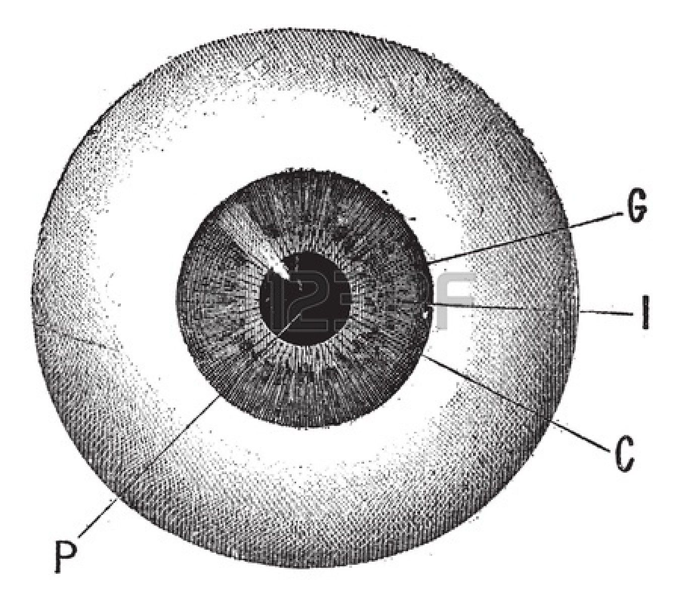 Eye diagram vintage google search bcy24 publicity what do diagram pooptronica Choice Image