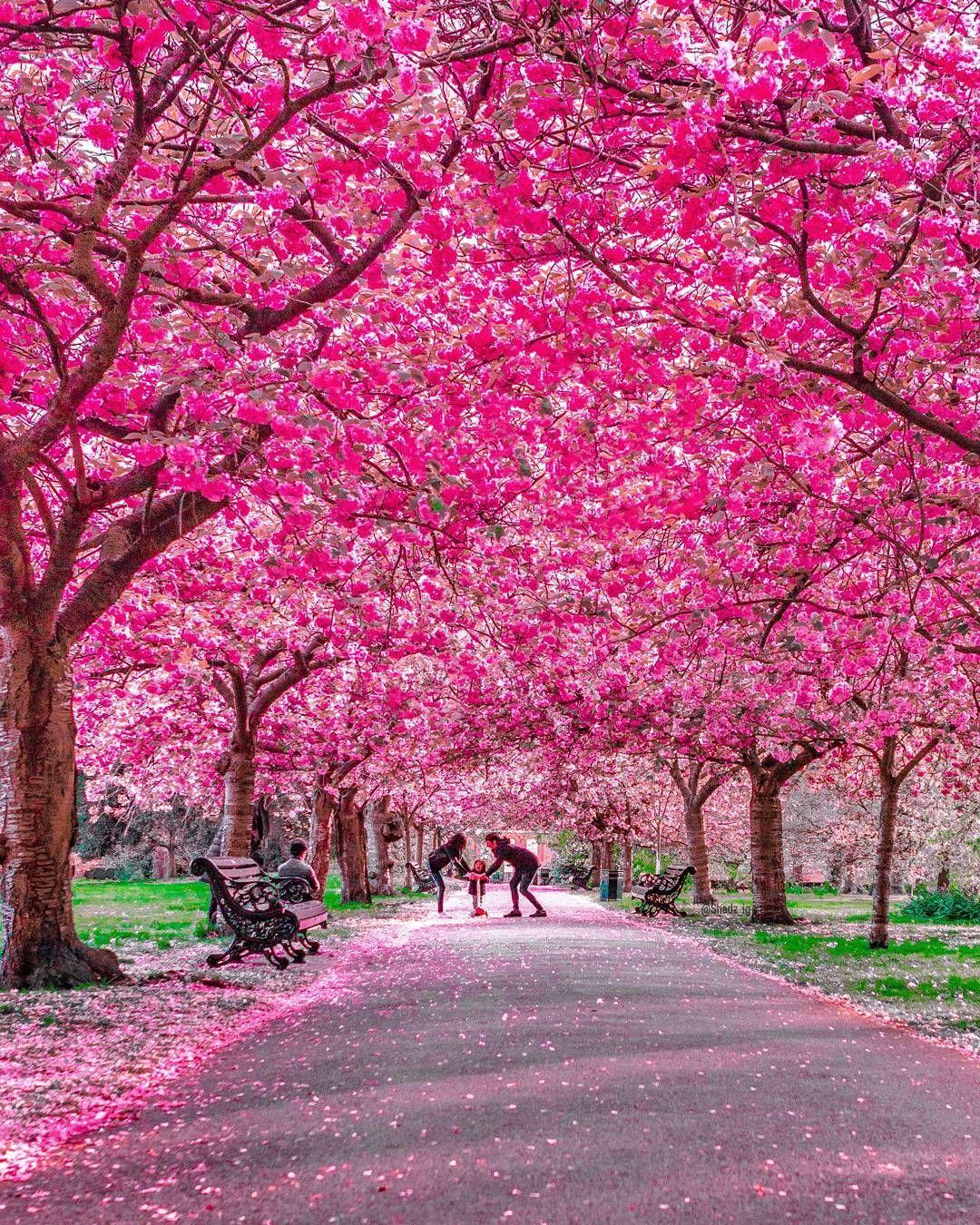 sakura flower park near me