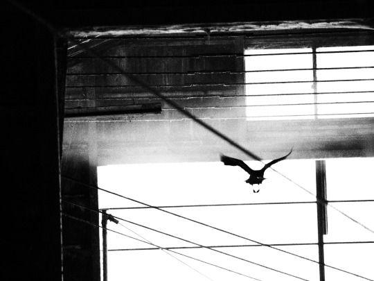Juri(jiji) Photography