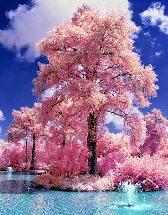 Japanese Garden Cherry Blossom Paintings japanese water gardens | japanese water gardens, water and gardens