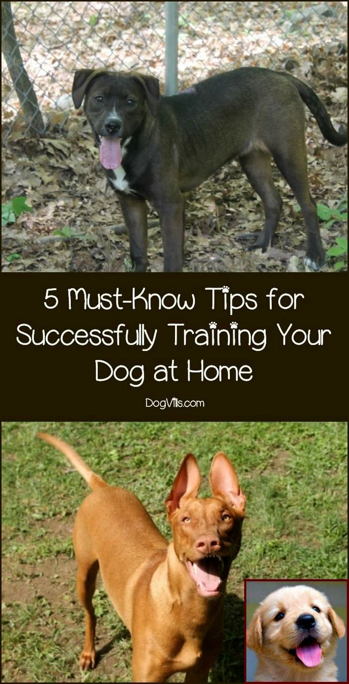 Dog Behavior Qualifications And Clicker Training Dogs To Heel