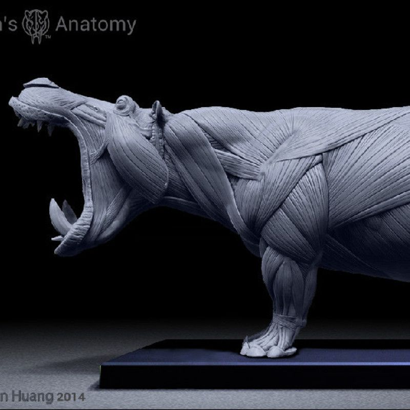 Hippo anatomy model, www.junsanatomy.com | Animals (photo ...