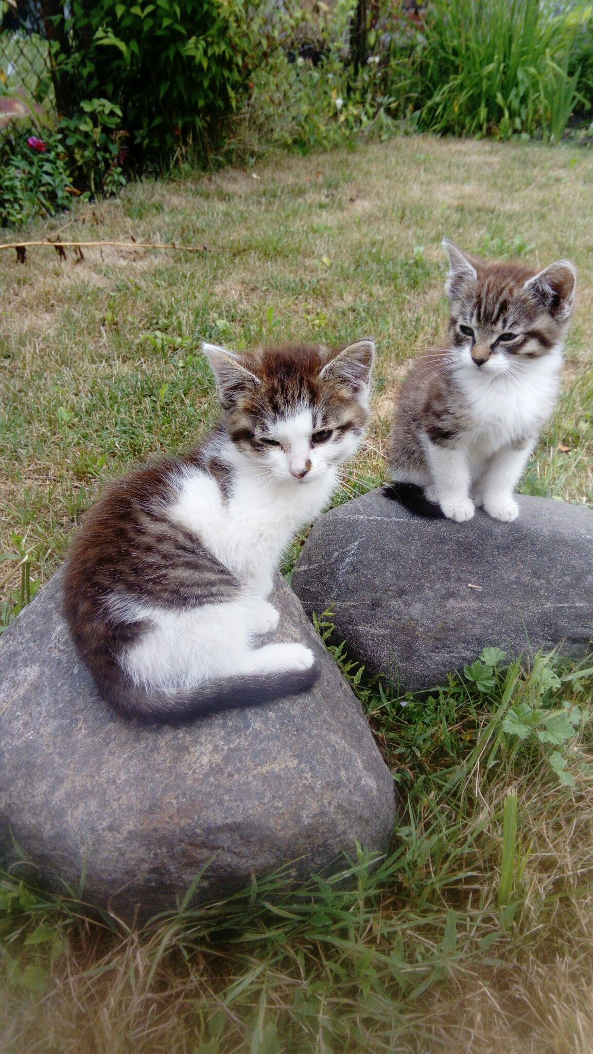 I Think Mama Wants Us To Go Back Inside Kittens Cutest Cats Cute Cats