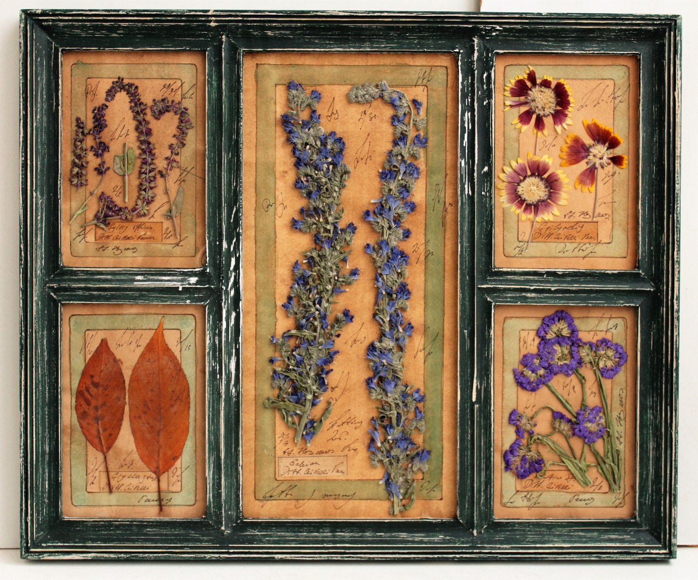 Rustic wood frame, pressed plants, Herbarium, 15,4x18,4 inches ...