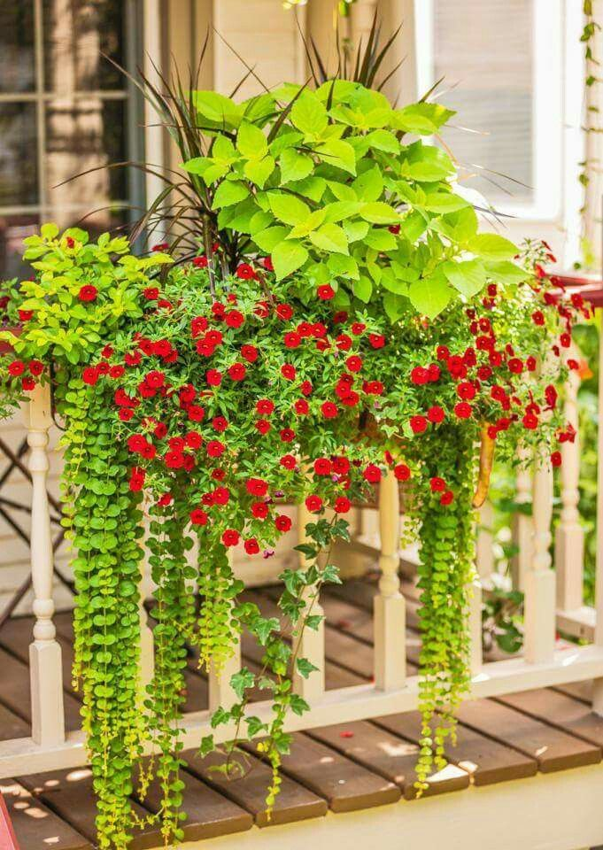 Pin by Denise Miech Stumpenhorst on gardening   Pinterest   Gardens ...