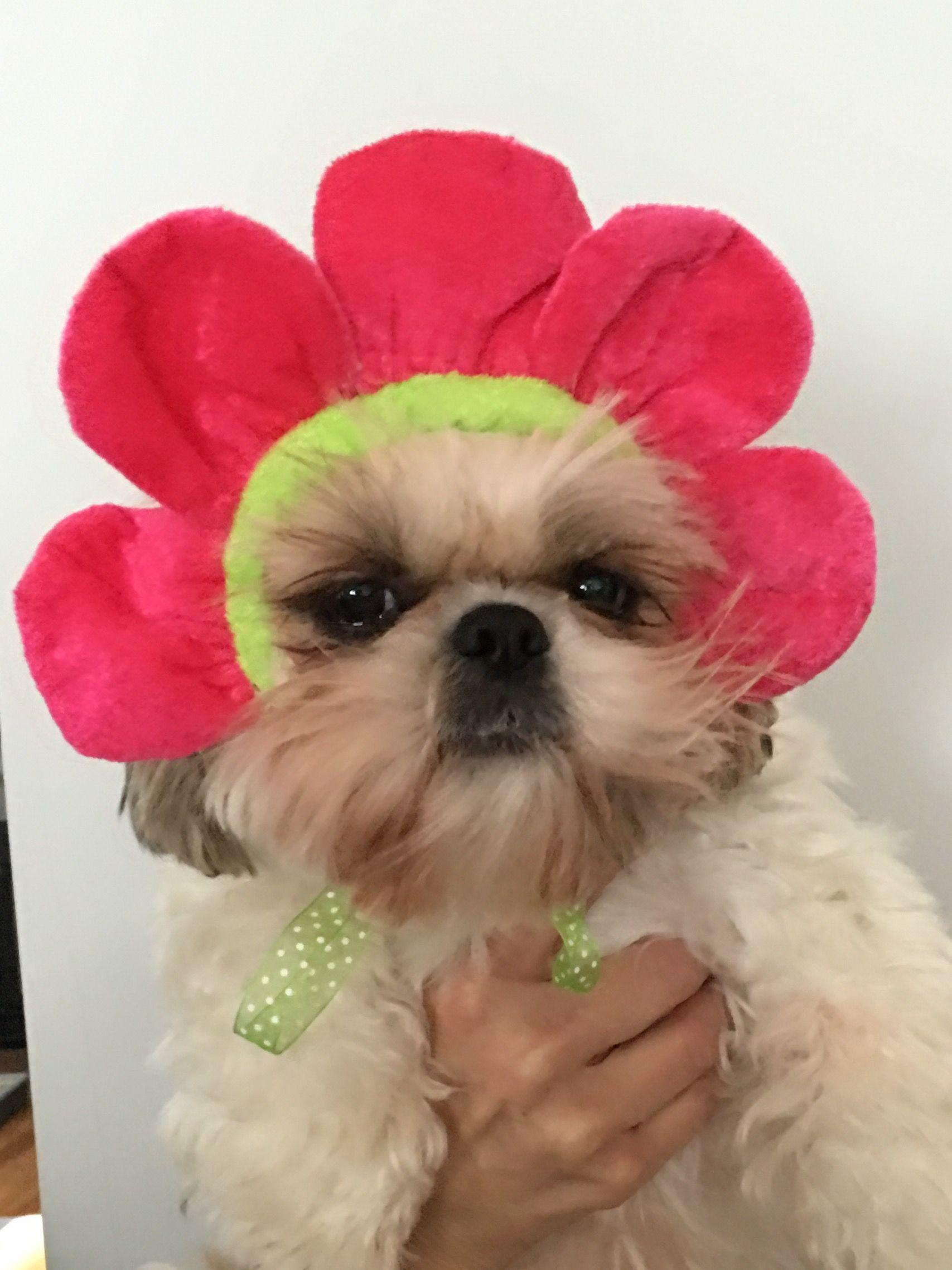 Flower Power modeling her flower hat Dog flower, Dog