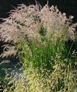 Gaissmayer Stauden calamagrostis varia berg reitgras mit stauden gestalten