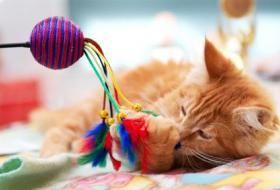 jouet chat laisse