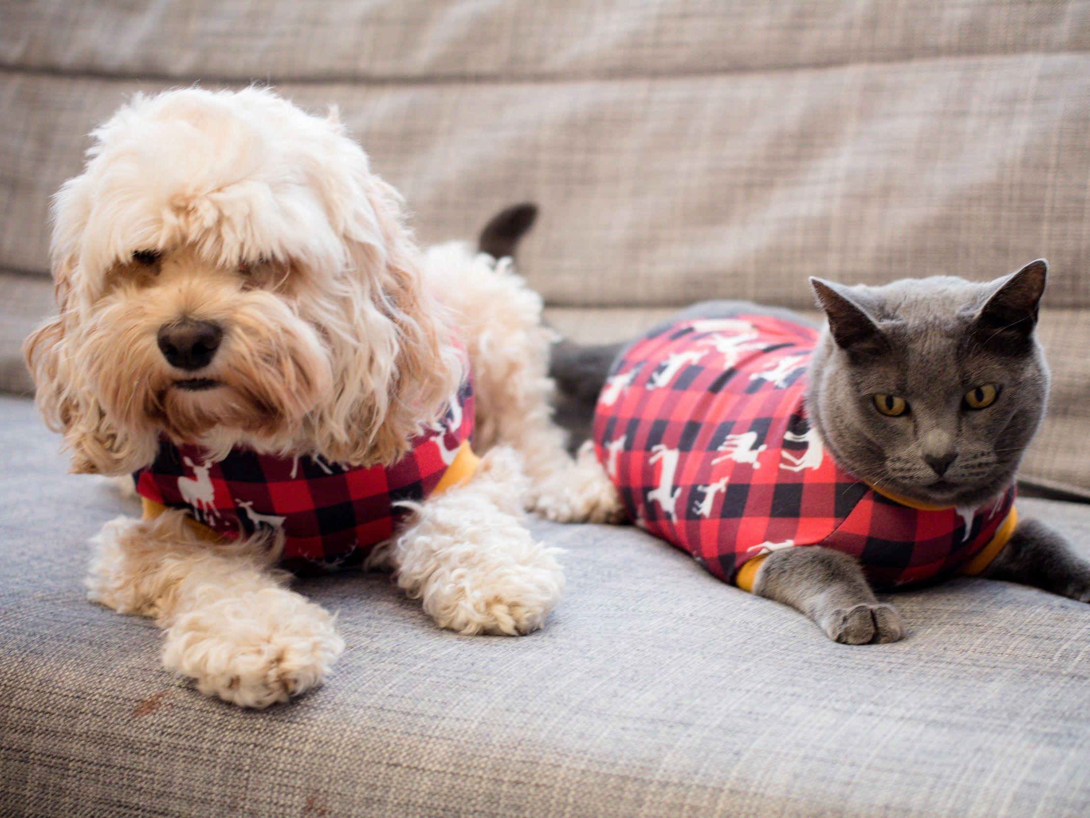 Sew A Little Seam Pet Movie Night Pajamas Night Pajama Pets Movie Pets