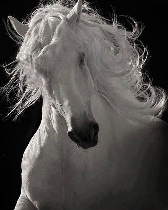 Belleza de caballo