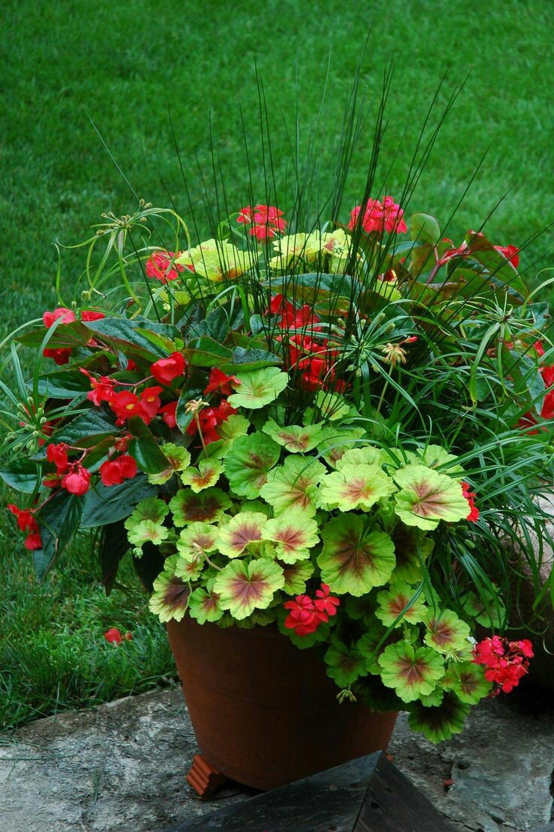 Nascimento Ferreira 화분 꽃, 식물, 화분 키우기