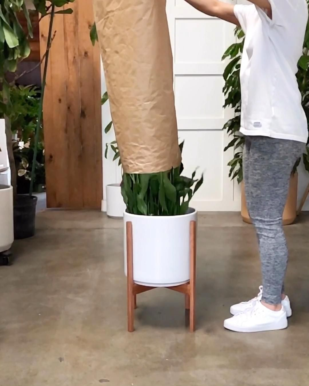 Plant Porn 🌱 Peace Lily aka Spathiphyllum + Modern Planter and Plant Stand