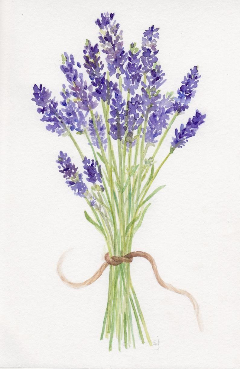 Lavender Artwork Watercolor Lavender Bouquet Original Painting