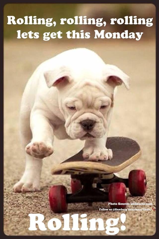 Good Morning Dog Funny : morning, funny, Funny, Morning, Images, Quotes, Timeline, Animals,, Bulldog,