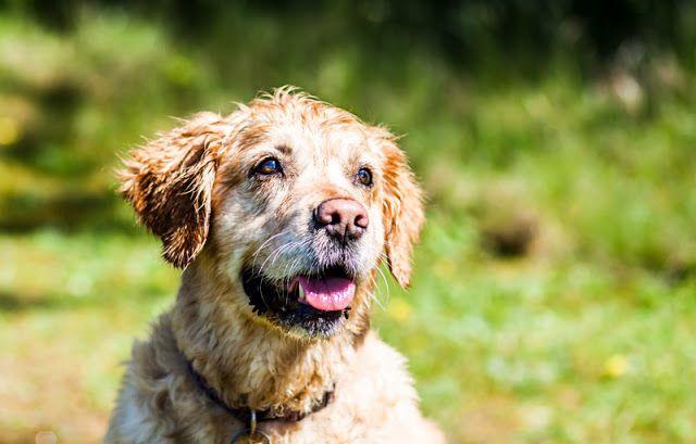 The Best Dog Training Treats Dog Training Best Dog Training