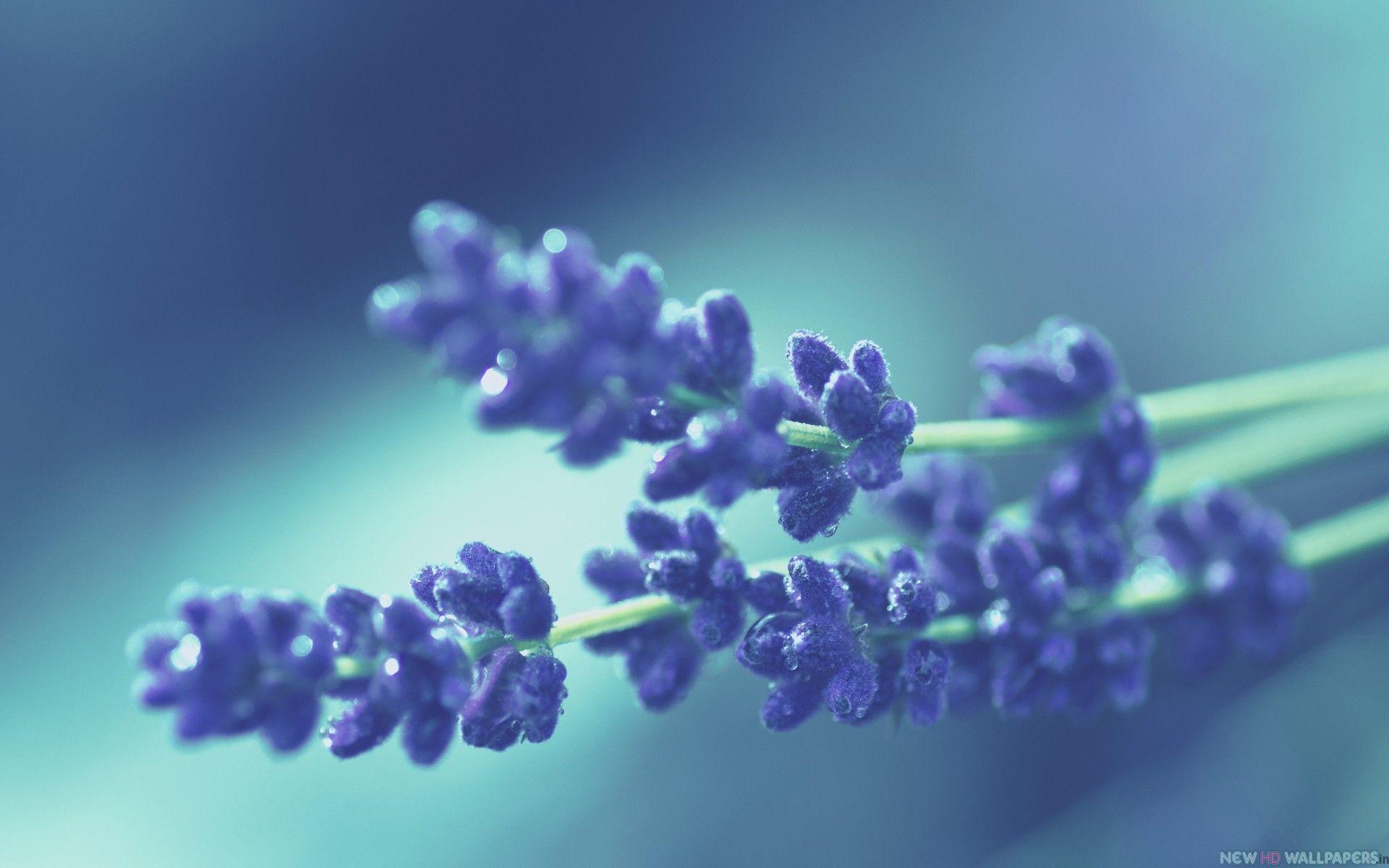 Blue Flower Macro Google Search Magical Blue Pinterest