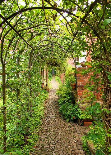 Garden Path Pergola Covered In Vines And Fruiting Trees Trained To Grow  Over Garden Structures,
