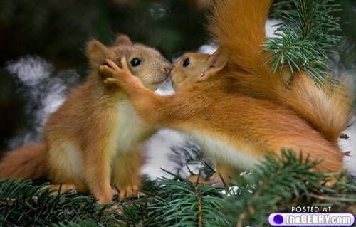 Found love? These animals have…