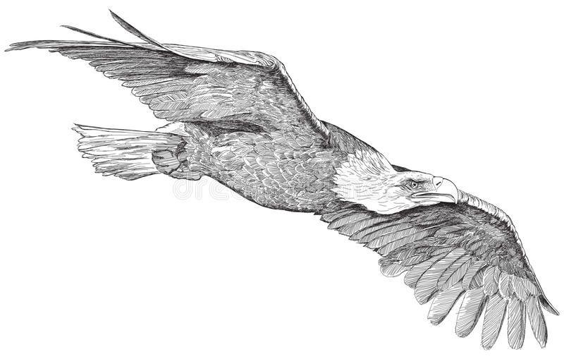 Bildergebnis Fur Fliegender Adler Zeichnung Adler Zeichnung