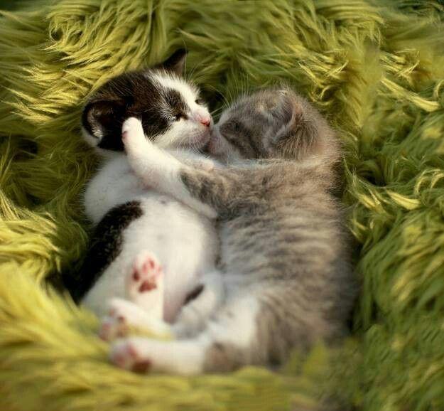 Kittens Kittens Cutest Cute Animals Kittens