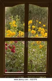 Afbeeldingsresultaat voor view from window