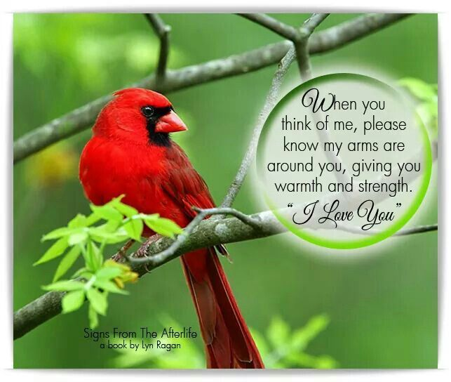 Pin By Cheryl Lightsey On CARDINAL PICS & QUOTES