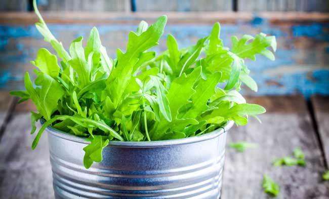 Coltivare la rucola in vaso, per l\'orto sul balcone | Rucola in vaso ...