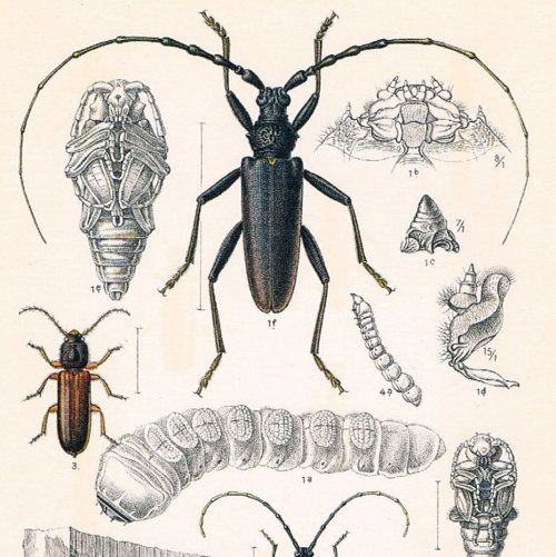 Insects | NHD Entomology | Pinterest | Tier